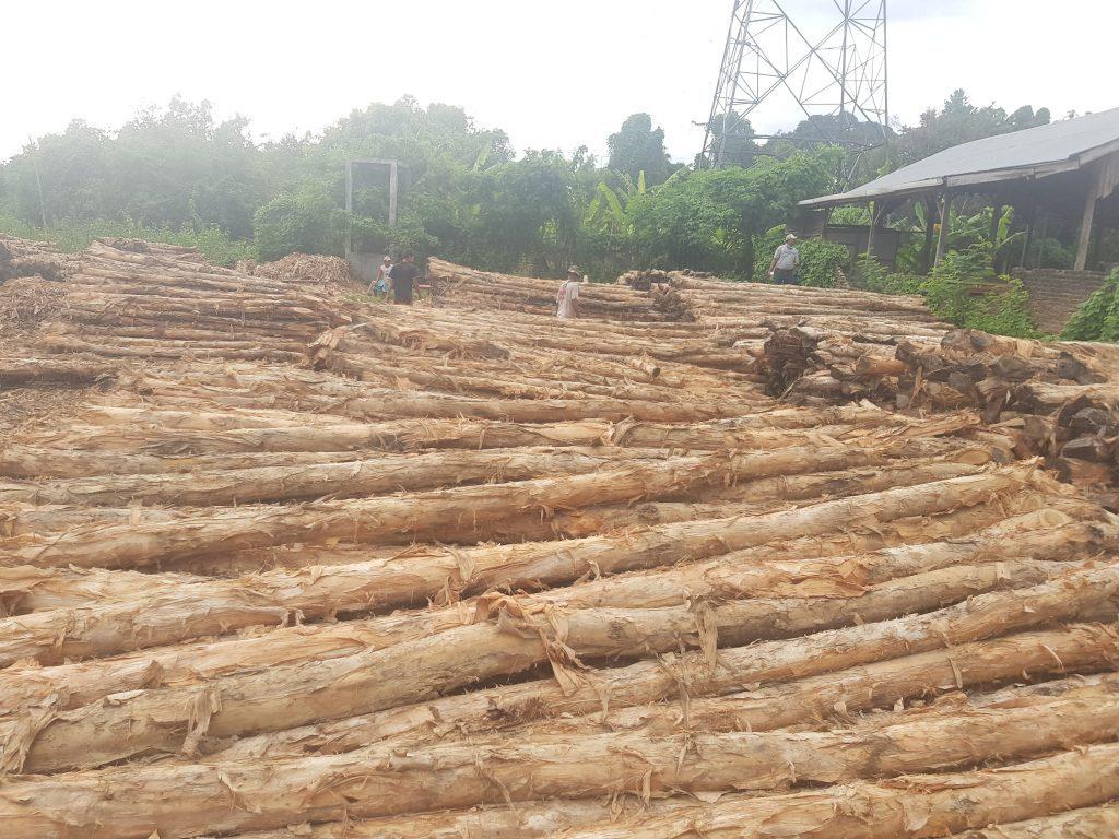 Jual Kayu Dolken Gelam Kota Serang | Jual Kayu Dolken Gelam Harga Murah dan Free Ongkir